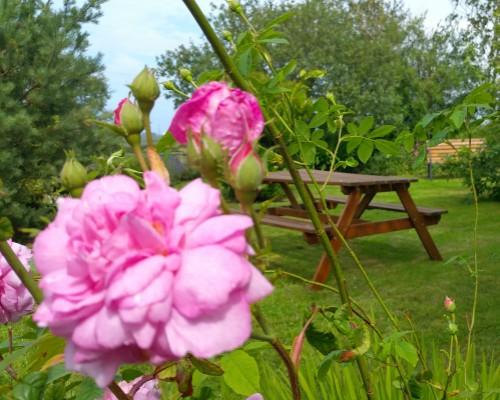 Ysgubor Mawr garden