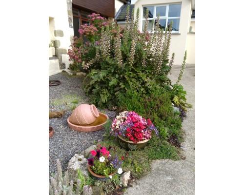 Ysgubor Mawr Rock garden